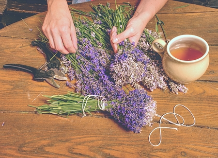 Beautiful smell violet wild Lavender bouquet in the hand, scissors, wooden table. Artist prepare levander stalks.
