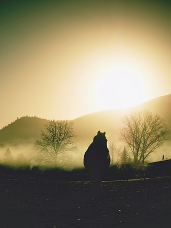 Horse walks in mist. Cold fall day in mountain region, horse range. Imagens
