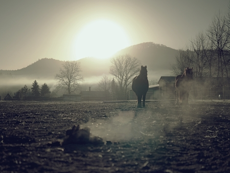 Horse walks slowly in muddy run, smoking  pile of excrement. Imagens