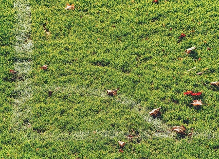 Messy football field with colorful autumn maple leaves. Green grass background close up
