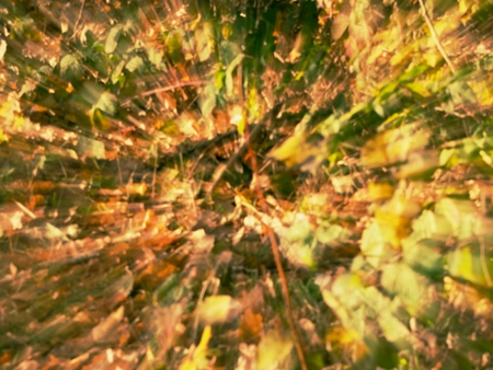 Amazing blurry movement background of natural autumn foliage