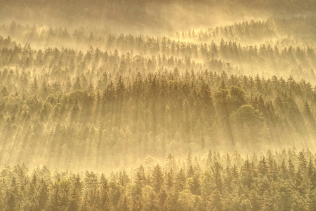 Magical autumn forest with sun rays in the morning. Colorful landscape with foggy forest gold sunlight orange foliage at sunset.