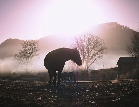 Brown calm horse grazing on pasture at sunset in orange sunny beams. Dramatic foggy scene.