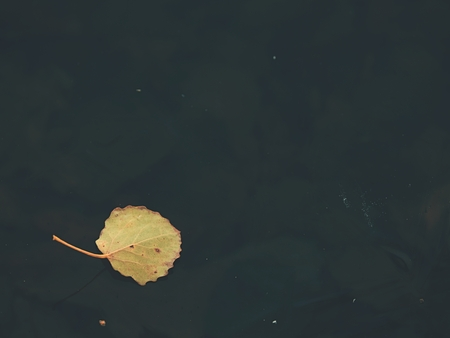 Old dry leaf in ice. Winter weather.  First december frost freeze water level of lake. Banco de Imagens