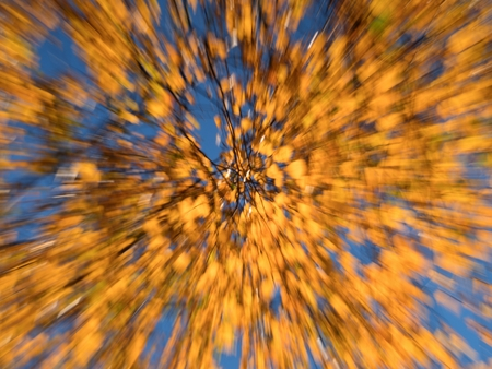 Autumn background - defocused colorful November leaves blur in leaves forest