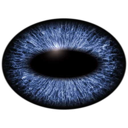 Close-up of blue unhuman eye on white background.