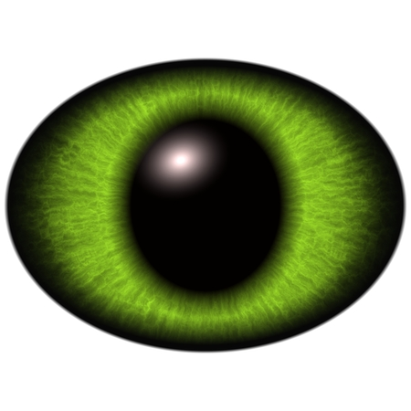 Green raptor eye with large pupil on white.  Isolated elements of eye