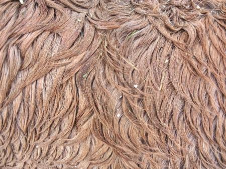 Flauschiges nasses braunes Pferdewinterfell. Tierhaare aus Pelzponny-Leder. Körper aus natürlichem flauschigen braunen Rindsleder Standard-Bild