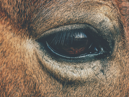 Brown horse head. Horse walks in the farm meadow or field. Reklamní fotografie
