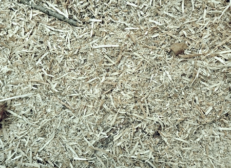 Dry wood chips with autumn leaves. The slivers are white and yellow with beech leaves.