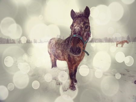 Brown horse in snowy paddock.Added light abstract effect. Winter season in horse farm.