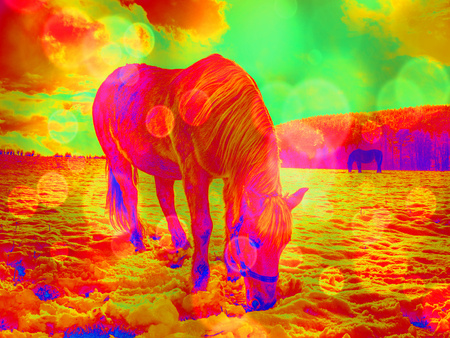 Spring view to pasture with old horse. Hipster abstract effect