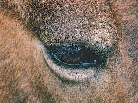 Head of horse in detail. Close up view.  Domestic old horse.