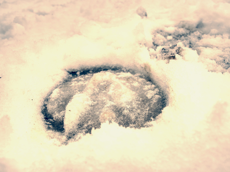 Icy horse footprint in snow, detailed piece of snowy mark. Deep marks of horse hoofs.