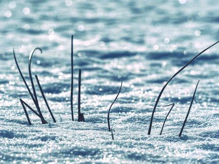 Snowy frozen grass in snow in winter. During winter snow melt and rural fields 版權商用圖片