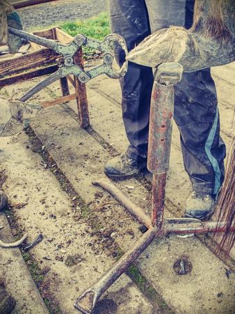 Blacksmith using rasp,  hoof knife and hoof cut nippers. Clearing of hind horse hoof hold in holder. Imagens