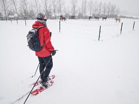 Caminata de niña con raquetas de nieve en el prado de caballos nevados. Nevadas en el paisaje invernal, ventoso clima brumoso