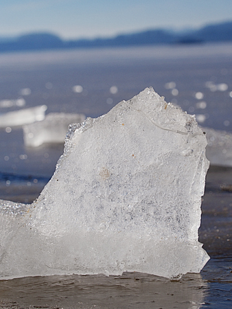 Frozen bubbles in drifting floe. Arctic ice cough on sandy beach. Climatic changes.