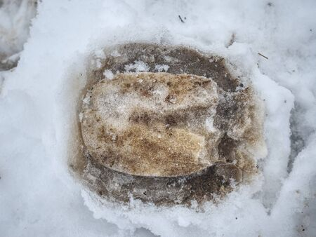 Horse galloping foot print in snow covered ground with stalks
