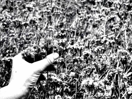 Hand is touching flower in the garden with green leaf background.  Abstract filter.