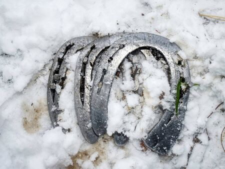Removing of worn out horseshoes within snowy ground in background. Horse care on village farm. traditional life