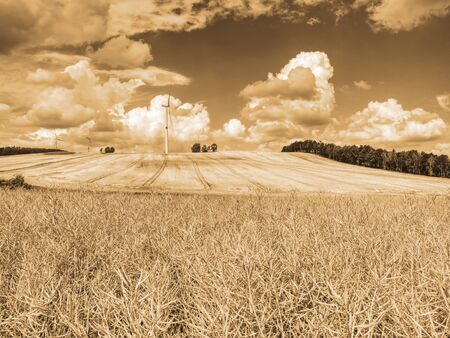 Cheap energy. Wind energy turbines in wheat field with blue sky, Renewable electric energy source, Green energy nature friendly. Wind generator on cloudy sky