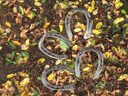 Worn out manual hammered horseshoe after change lying on the grassy ground with colorful autumn leaves around. Autumnal season in horse farm. Banque d'images