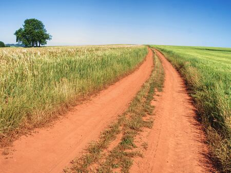 Red farm road between barley fields. Dusty dirt road through  green field, lonely tree and cloudy sky.  写真素材