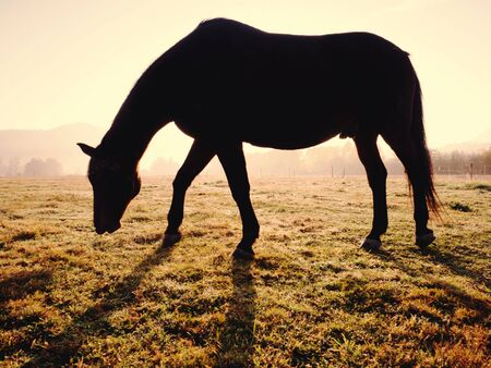 Horses in the morning mist on the pasture in October, autumn starts Stockfoto