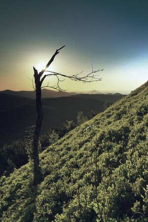Popular trail in rocks covered with blueberry bushes and broken trees. Rounded summit boulder Stok Fotoğraf - 132614473