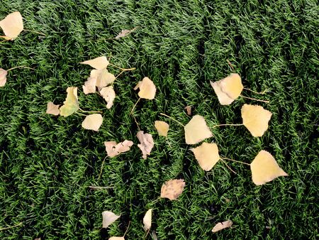 Soccer turf. Field with bright green artificial turf and fallen leaves from trees