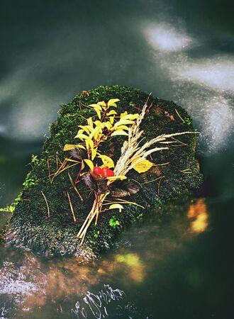 Autumn flower still in water. Stalks and leaves on sunken basalt stone in blurred rapids of mountain stream. Shinning bubbles in dark water
