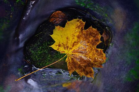 colorful autumn leaves reflecting in small pond. Lightpainting in rapids Reklamní fotografie