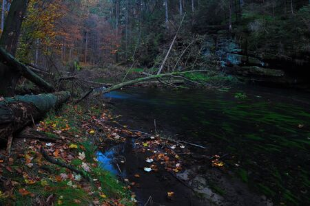 Autumn theme. The mountain river with low level of water fresh green mossy stones and boulders on river bank covered with colorful leaves Reklamní fotografie
