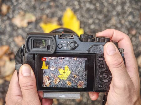 Detail of using camera for taking autumn photos. Nice colored leaves of bushes and trees in nature. Close up view to cameraman equipment. 写真素材
