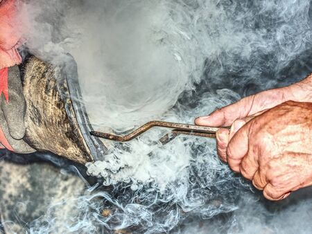 Farrier burns a hot horseshoe hoof.  Blacksmiths pliers hold horseshoe on hoof for shape comparison and accurate horseshoe fit. Banco de Imagens
