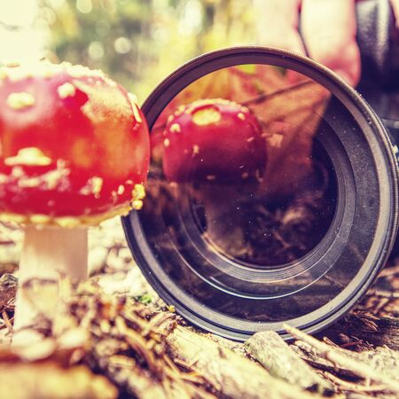 Woman nature photographer leans down to take a close-up photo of mushrooms in leaves on background of autumn forest