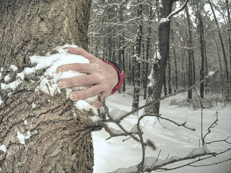Hands with long frozen fingers touch tree bark. Detail of male hands with wrists hold trunk in forest.