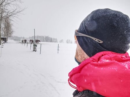 Sports man with ginger beard, black cap and orange glasses, watch horses in paddock while snowfalling. Snowy landscape.