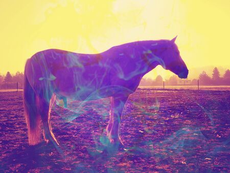 Grazzing horse in meadow on abstract background. Color effect. Abstract filter.