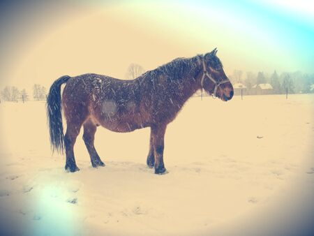 On a sad winter day the horse in snowy pasture.  Abstract filter.
