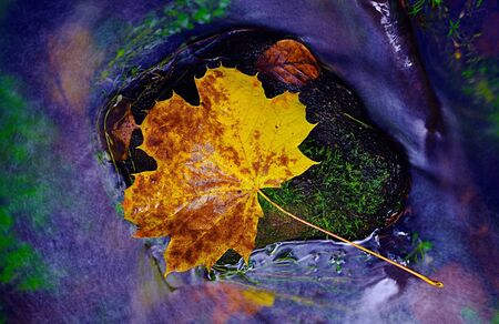 Leaf in shinning drops of mountain stream. Drops lightpainting. Detail of rotten yellow maple leaf lay on dark stone in blurred mirror water