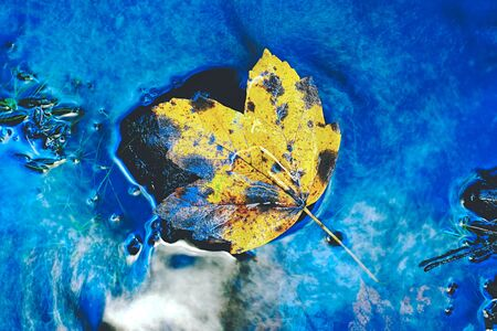 colorful autumn leaves reflecting in small pond. Lightpainting in rapids Stock fotó