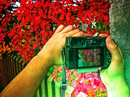 Photographer hold camera close to red autumnal leaves.  Abstract filter.