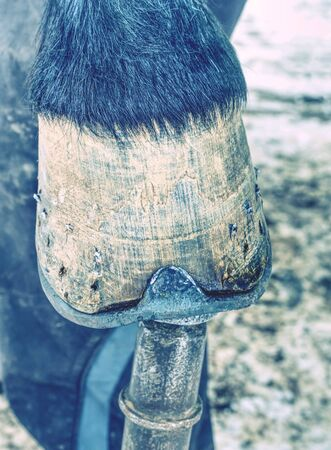 Farrier with nail and hammer. Hands using a shoe to pick up a horse's shoe