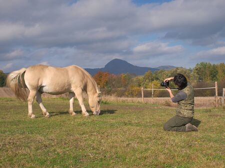 Black hair pretty woman artist taking photo of nice grazing horse on meadow. Capturing agricultural mammals animals in natural environment.