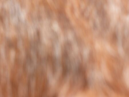 Blurry background of a tail of a Stallion horse , natural light brown