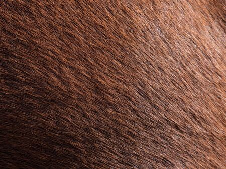 Reflection on the horse leather skin. Light brown racing horse with short hairs or fibers. Natural color.