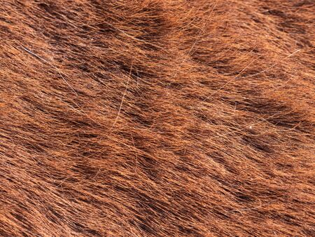 Light brown horse fur in the morning light. The natural look of halfling spring fur.