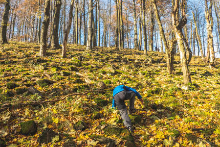 Active small boy is climbing on all four up to peak of stony hill. Autumn forest with yellow orange leaves on ground.